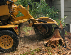 stump grinding tips