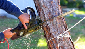 tree trimming techniques